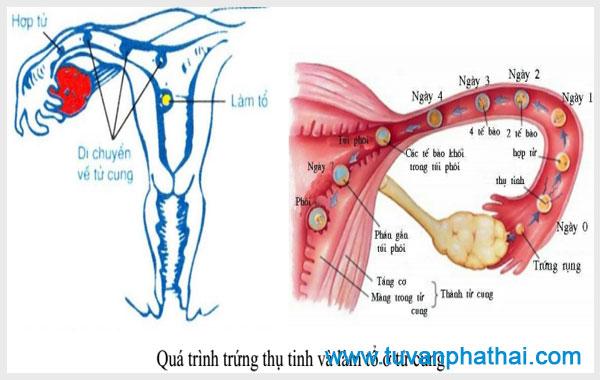 Chậm kinh và đau bụng dưới có thể do bạn đang mang thai